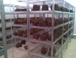 Shiitake Mushroom Cultivation,  Kiev Region, Ukraine